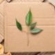 """Alla scoperta dell'imballaggio """"verde"""""""